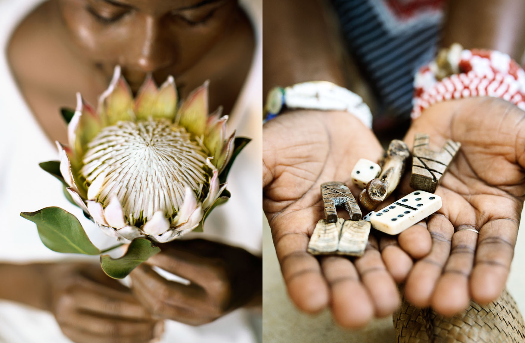 Proteas, the national flower of South Africa, grow wild at Kirstenbosch National Botanical Gardens in Cape Town.  A sangoma is a traditional healer and fortune teller, shown here displaying some of the charms she uses to forecast the future